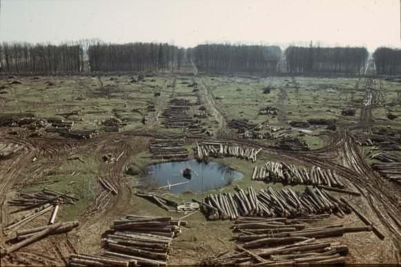 Parks pēc koku izciršanas 1976. gadā