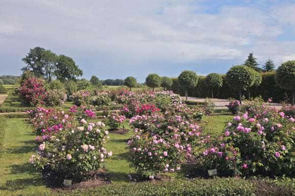 Šuvalovu rožu dārzs